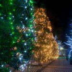 我が家でクリスマスイルミネーション!飾り方講座 ベランダ・植木編