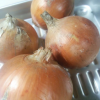 玉ねぎを大量に消費するなら! 簡単レシピいろいろ玉ねぎの醤油漬け!
