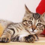 ペットにもある現代病を知っていますか?大切な家族のために