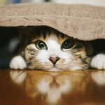 おいしいにゃーん♪猫がとびつくいわしの水煮
