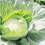 狭い家庭菜園で野菜を育てるには 野菜を育てる時期を知ろう!