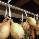 農家直伝!大量の玉ねぎの長期保管方法 農家のお婆ちゃんから教わりました!